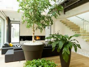 quelle plante pour une chambre choisir une plante d 39 intrieur selon la pice de la maison