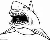 Megalodon Coloring Shark Coloringall Printable Million Easy Fish Lived Paper Crafts Shape Animal Ago Years sketch template