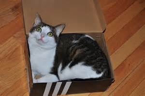 cat in a box casual slack it s just a cat in the box