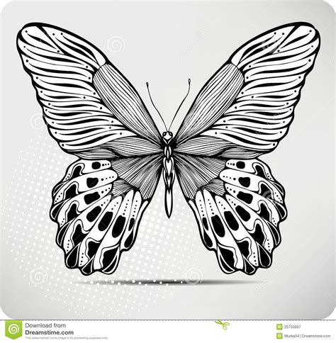 butterfly hand drawing vector illustration stock vector