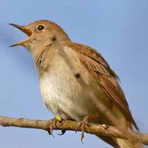 Uccelli Non Volanti by Uccelli Migratori Perch 233 Gli Uccelli Migrano Animali