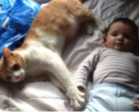 cats and babies cats and babies tales pet dental