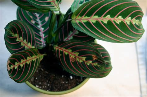 low light indoor plants safe for cats 6 beautiful houseplants safe for cats and dogs that you