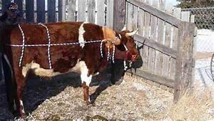 Storybrookeripples  Ox And Dog Blog  To Make A Single Ox