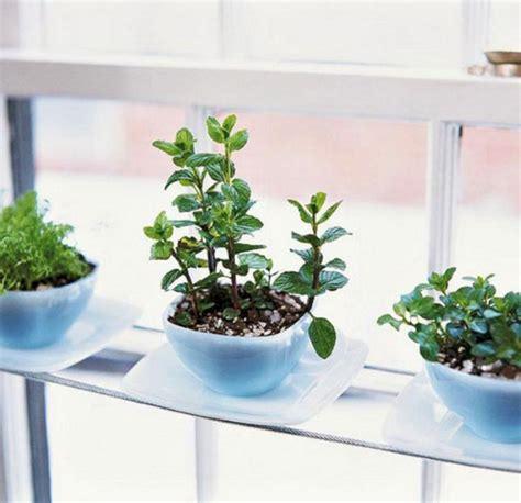 garden herb windowsill indoor gardening