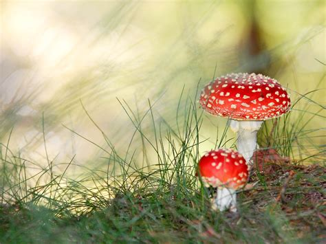 Mushroom Wallpapers And Desktop Backgrounds - All HD ...