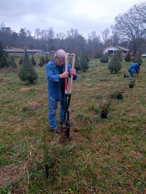 christmas tree farms chattanooga kittle tree farm home