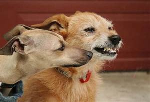 understanding aggression in dogs pooches at play With aggressive dog behaviour