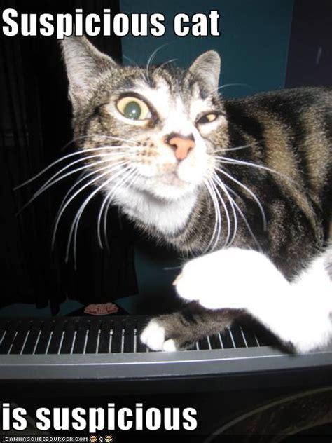 suspicious cat  suspicious cheezburger funny memes