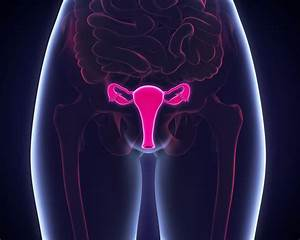 Examining The Ethics Of Deceased Vs Living Uterus Donors