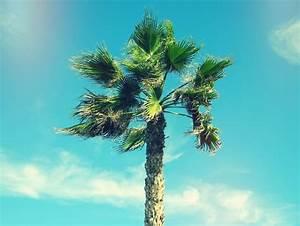 Palm Tree Tumblr Theme   www.imgkid.com - The Image Kid ...
