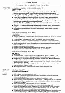 Business Development Assistant Resume Samples