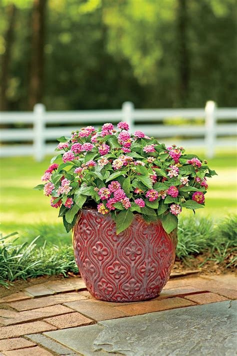 Heattolerant Container Gardens For Sweltering Summers