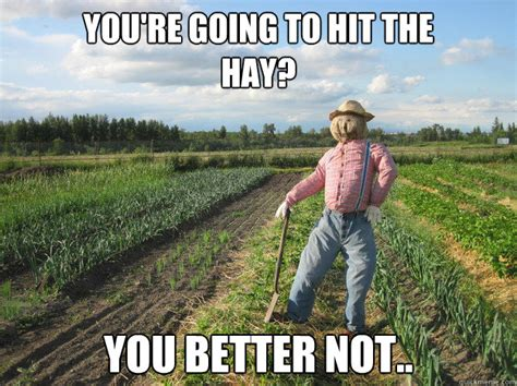 Hay Meme - you re going to hit the hay you better not scarecrow quickmeme