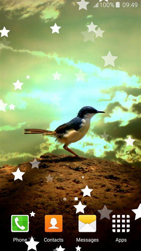 birds live wallpapers