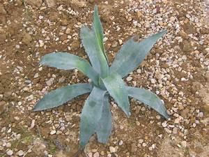Plantes Exotiques Rustiques : exotiques et rustiques oh jardin ~ Melissatoandfro.com Idées de Décoration