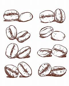 Coffee bean Hand drawn vector, sketch of coffee beans ...