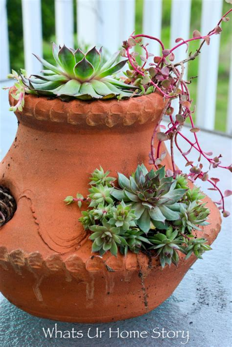 6 easy container garden ideas for the lazy gardener