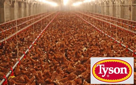 Tyson Foods Accused of Dumping More Poison to Waterways ...