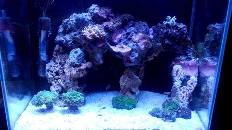aquascaping reef tank nano reef sick aquascape