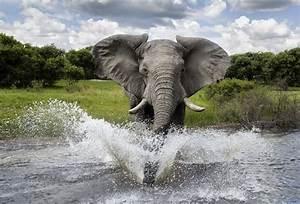 23 animales salvajes muy hermosos fress
