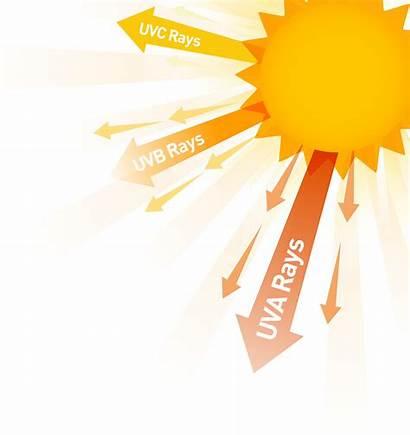 Sun Protect Exposure Eyes Sunshine Uv Rays
