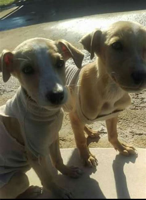 alimentazione cuccioli 2 mesi adotta un a siracusa cuccioli 2 mesi 2 chli in