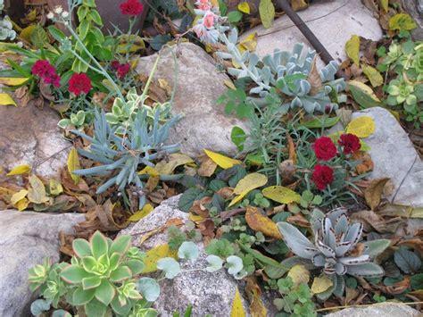 succulent rock garden garden ideas