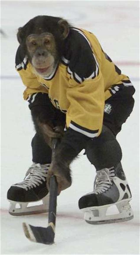 monkey hockey funny pictures entertainment