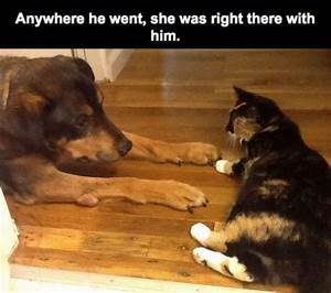Touching Story About Dog and Cat Who Truly Love One ...