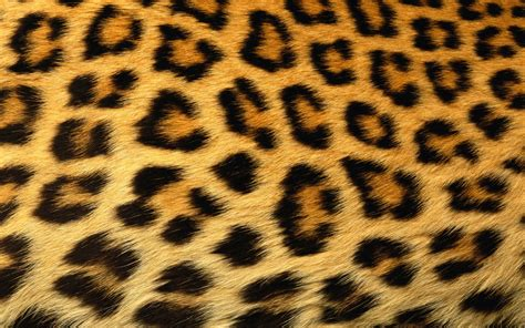 Animal Skin Wallpaper - leopard print background x free images at clker
