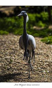 Photo taken with Canon EOS 6D Tamron 150-600 - Animal - YouPic