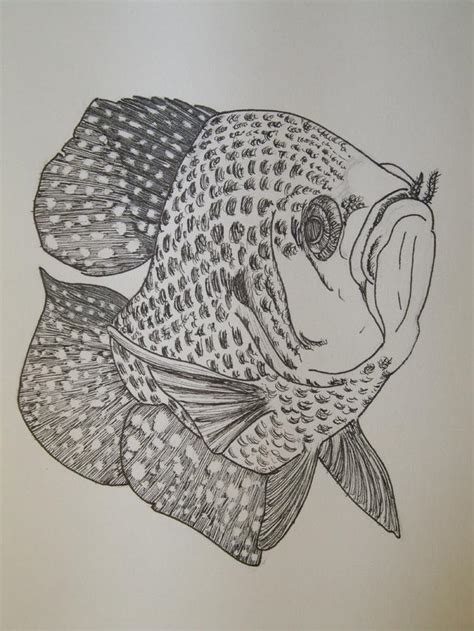 crappie drawing fishing tight skies wishing lines