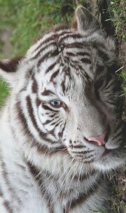 Mystical | Pretty animals, Animals beautiful, Wild cats
