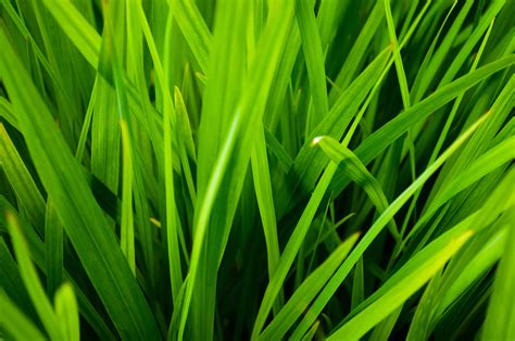 common types of grass the 4 most common grass types in fort worth tx