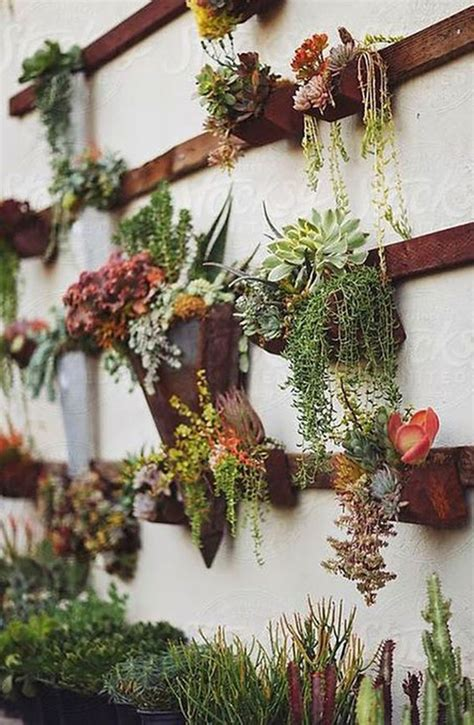 gorgeous succulent wall art  display houseplants