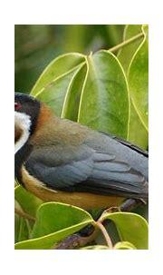 Birds Wallpapers 5 ~ Free Wallpapers, Best Wallpapers
