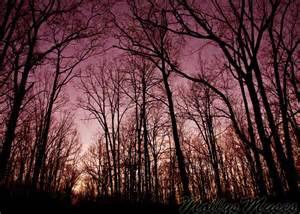 Landscape Purple Sky Forest