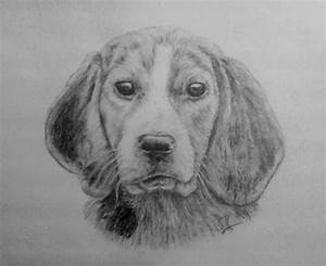 puppy - pencil drawing by nelutuinfo on DeviantArt