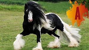 These must surely be the most beautiful horse breeds in ...