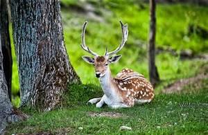 amazing beautiful deer seating in jungle image hd wallpapers