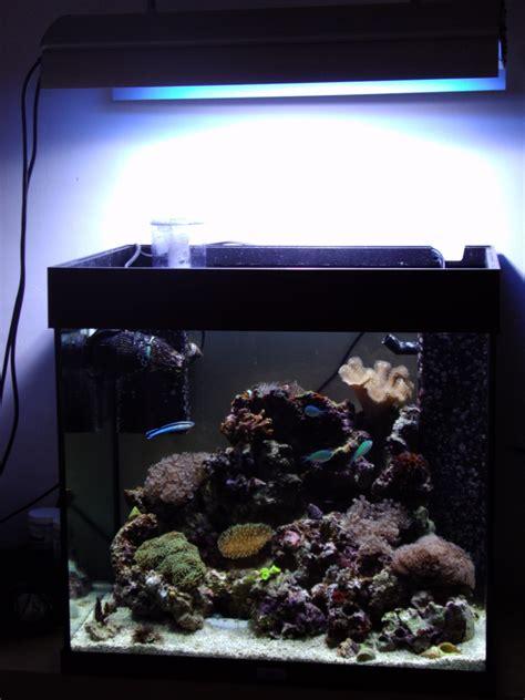 materiel pour aquarium eau de mer aquarium eau de mer 120l