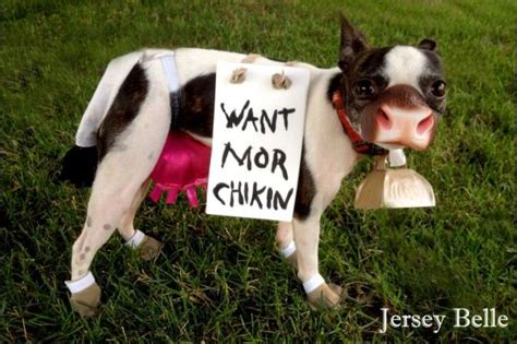 10 Homemade Costumes For Dogs