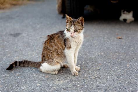 symptoms  feline immunodeficiency virus fiv