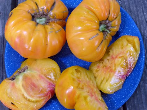 german tomato   southern exposure seed