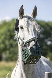 Fressbremse Pferd Tierquälerei