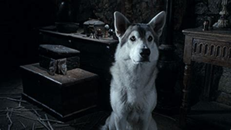 confused direwolf reaction gifs