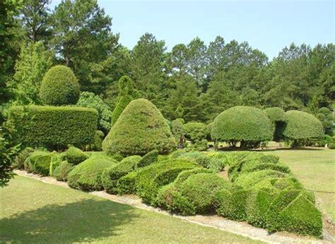 pearl fryar pearl fryar topiary garden bishopville lee county south carolina
