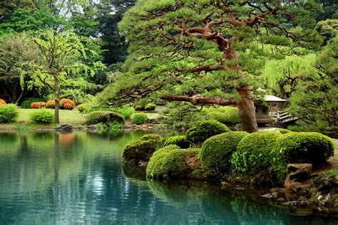 cuisines enfants calm lake and bonsai trees in garden