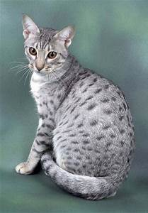 25+ best ideas about Spotted Cat on Pinterest | Pretty ...